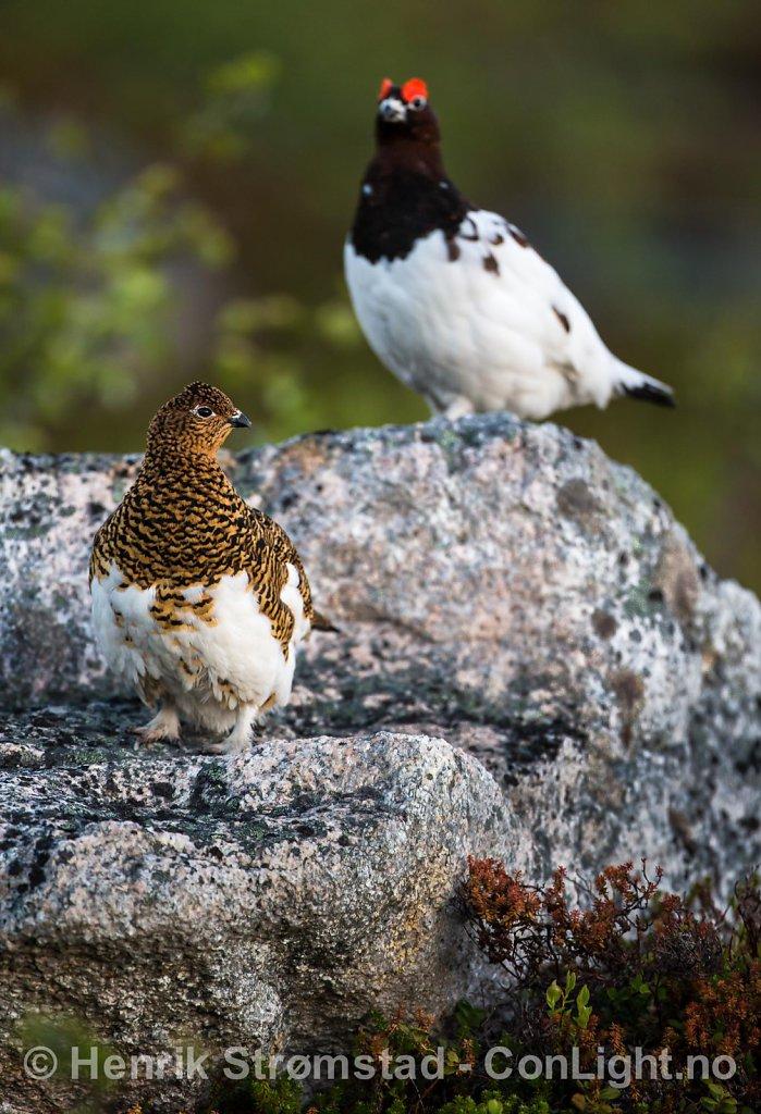 130526-Troms-1306.jpg