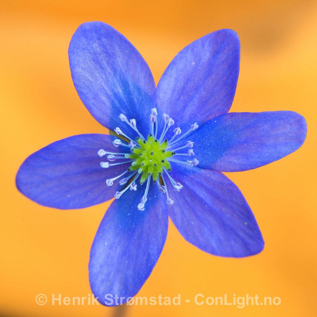 130519-Blomster-0020.jpg