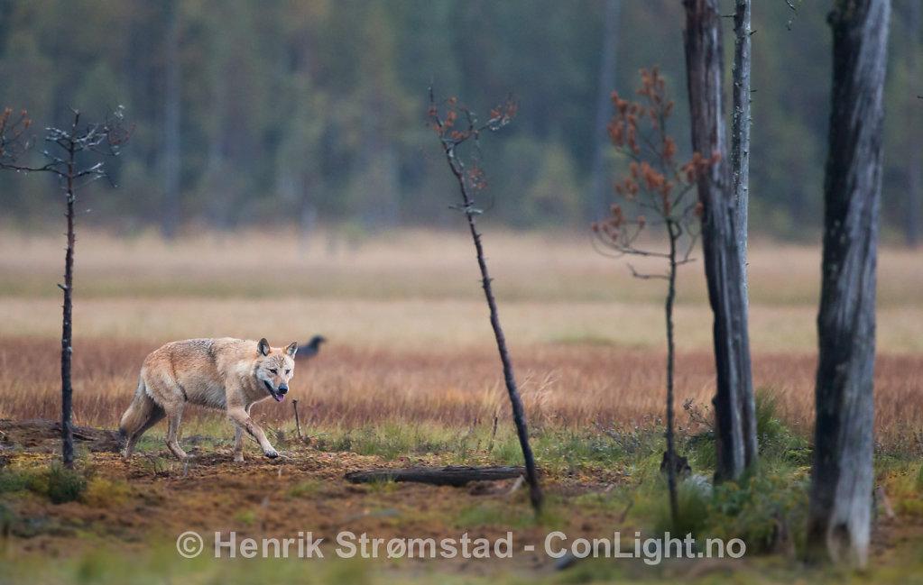 160908-Finland-0615.jpg