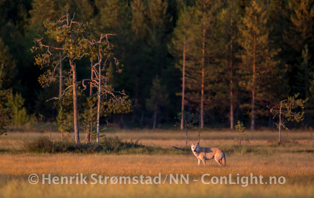 180903-Finland-0496.jpg