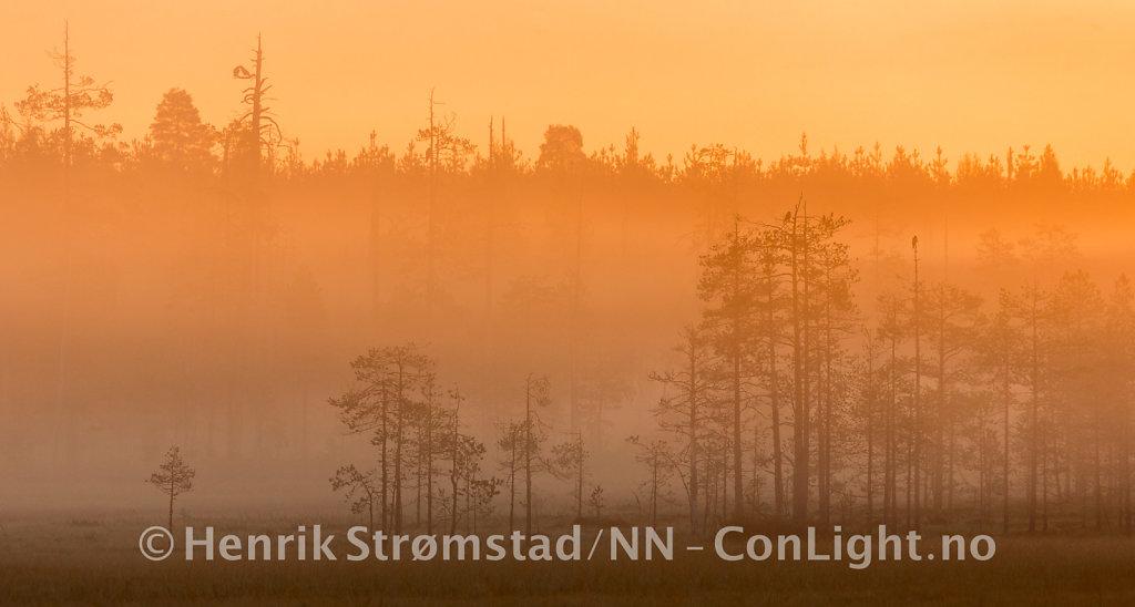 180904-Finland-Paradis-0181.jpg