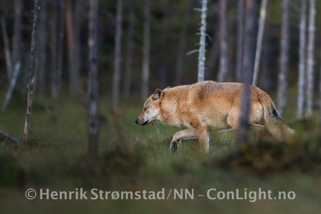180907-Finland-0560-Edit.jpg